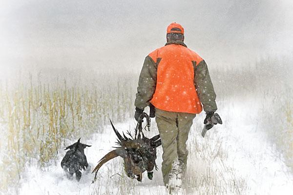 quail_pheas_forecast_f