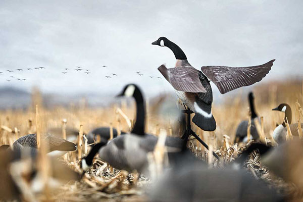 Top Waterfowl Decoys and Calls for This Season