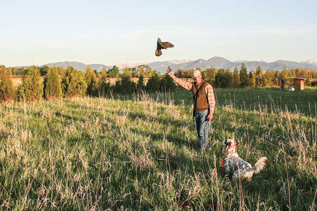 How to Handle Your Pointing Dog Effectively