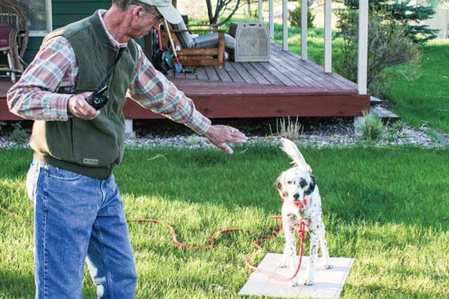Pointing dog training tips