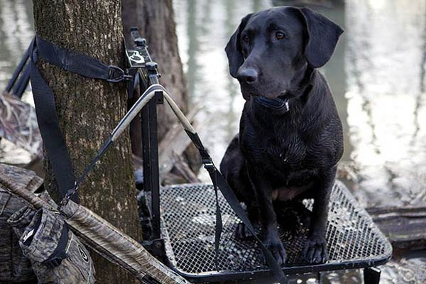 Dog Days: Gun Dog Gear Buyer's Guide