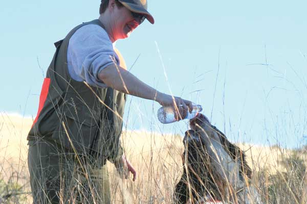 Best Tips for Preventing Heat-Related Issues in Your Bird Dog