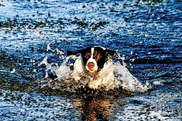 water_training_f