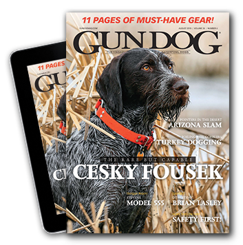 GUN DOG Training: Why You Should Increase Repetition, Not Punishment