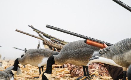 From affordable to expensive, there's plenty of guns to choose from this year. I shot a Stoeger