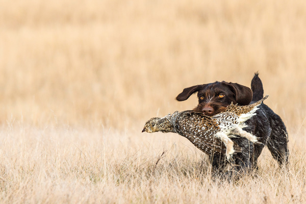 How to Re-Train a Hunting Dog