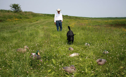 By spending just a little time beforehand, you can accustom your dog to work around and ignore decoys.