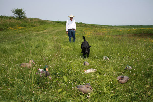 9 Tips: Train Your Dog To Resist Decoys