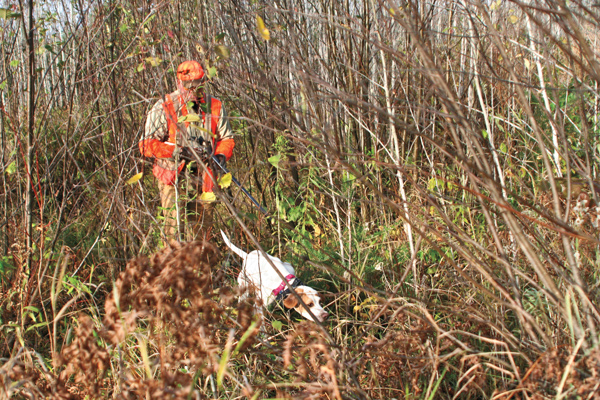 How to teach a puppy to hunt