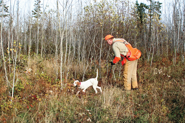 Puppy Training: Getting Ready to Hunt