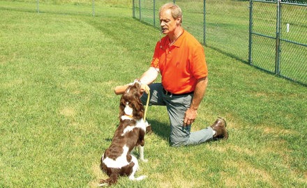 Teaching the steady command to your Gun Dog