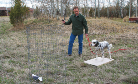 You've heard it before: it takes birds to make a bird dog.