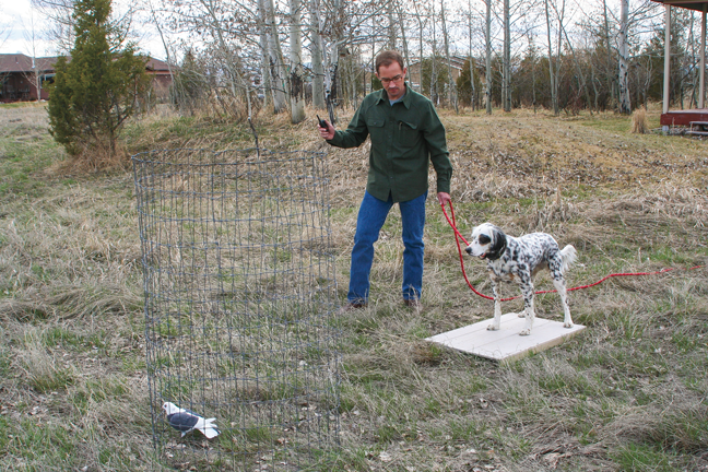 How To Train Your Hunting Dog Pheasants