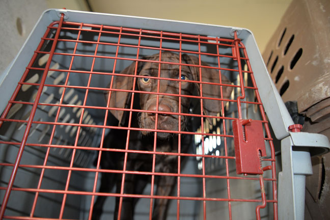 crate training a new puppy