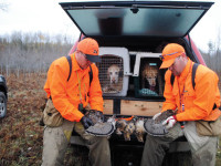 Labrador's for grouse hunting