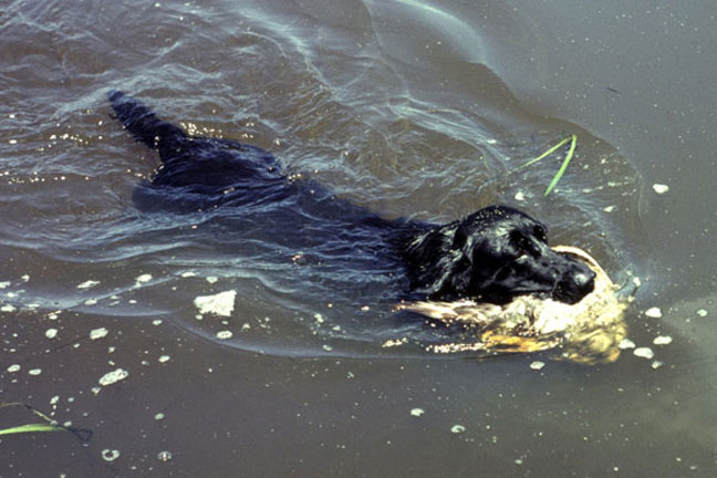 Dog Diseases born in water