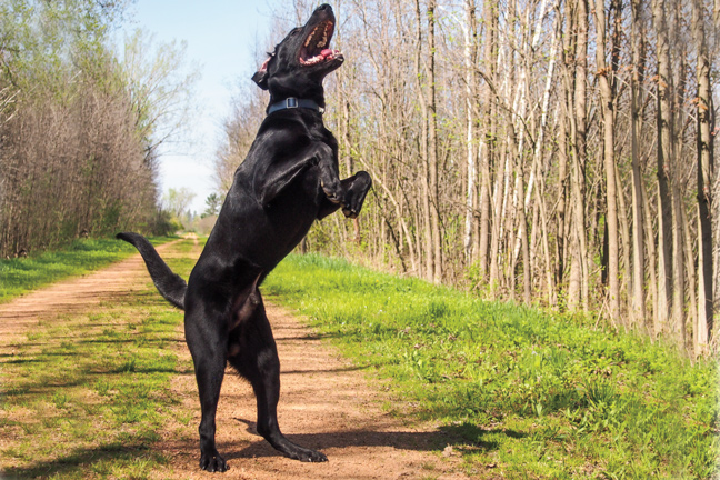 Maintaining Ideal Joint Health in Sport Dogs