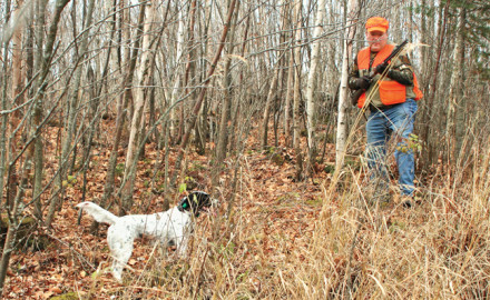 Developing a Great Grouse Dog