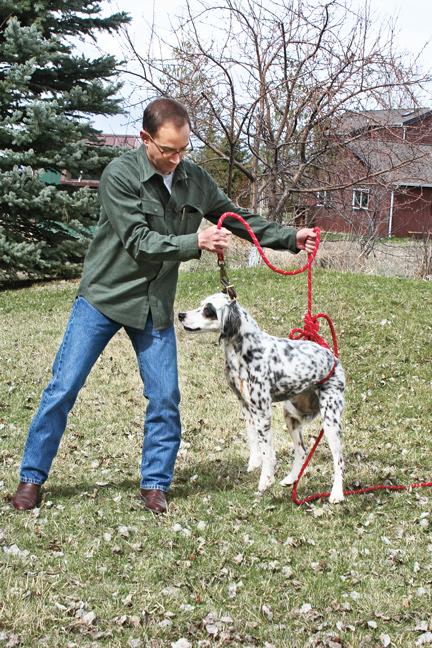 Teaching-a-gun-dog-whoa-command