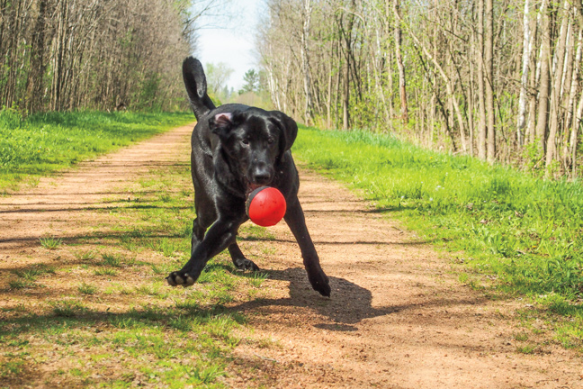 Tips for better joint health in gun dogs