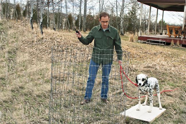 Training Your Gun Dog the Whoa Command