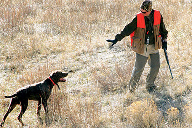 Training-your-grouse-dog-properly