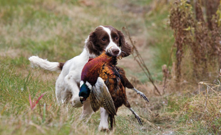 http://brightcove=1478198785  With bird season on the horizon it's time to teach pup, or review