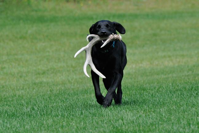 Best Bird Dog Training Tips