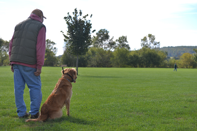 Great Tips for Training a Young Bird Dog
