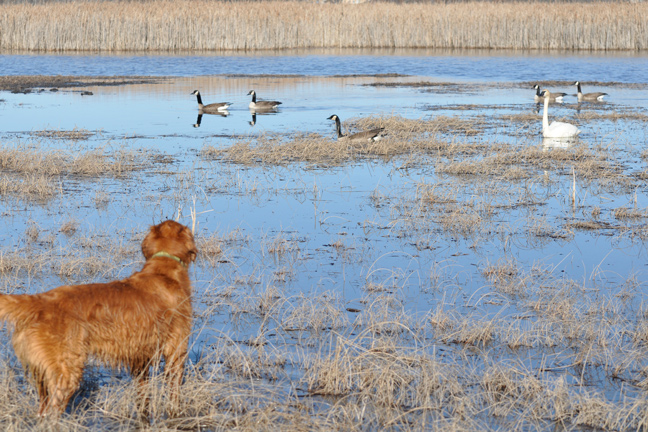 Tips for Challenging a Young Bird Dog
