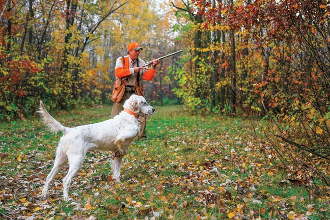 let-your-hunting-dog-work-the-birds