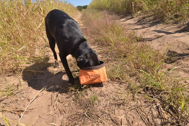 How-to-Choose-Right-Food-for-Your-Hunting-Dog