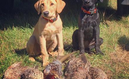 Hunting-Pups