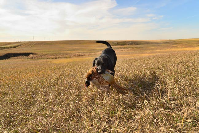 best-food-for-your-hunting-dog