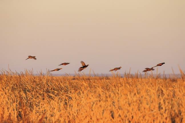 bird-hunt-south-dakota