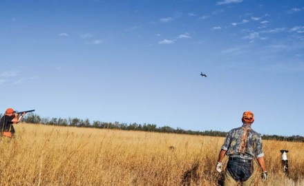 bucket-list-hunt-for-birds