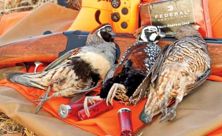 arizonas-quail-hunting-opportunities