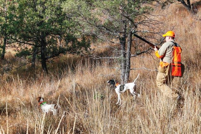 quail-hunting-arizona
