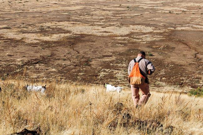 quail-hunting-in-arizona