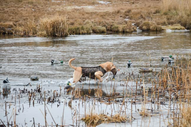 waterfowling-in-the-Northwest