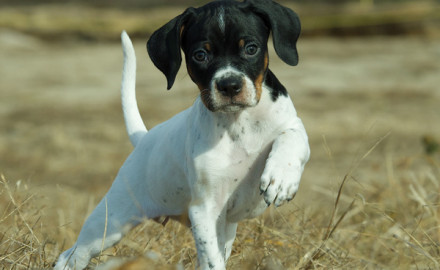 Gun Dog readers love to share puppy photos. And our annual reader Gun Dog puppy photo essay is one