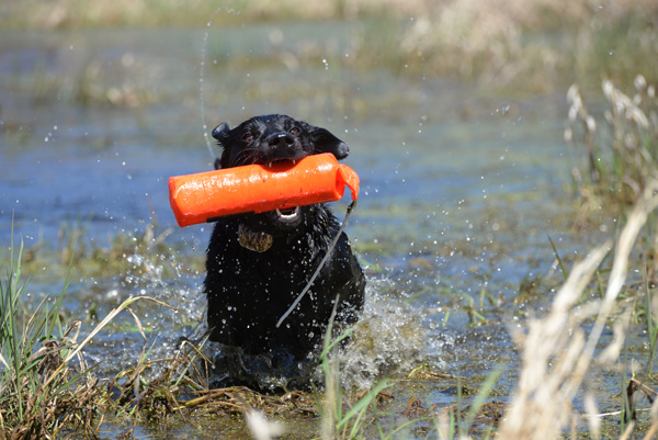 From training to dawn-to-dark hunting days, our bird dogs put in serious effort to please us. The least we can do is offer them the right supplements to aid in their post-activity recoveries.