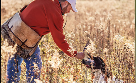 Knowing how to introduce your pup to its new environment then establishing a proper training regimen is critical to setting your gun dog up for success.