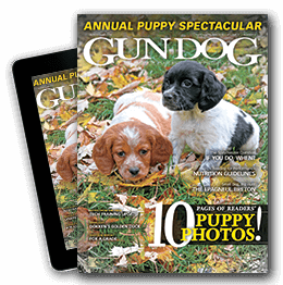 Gun Dog Magazine Cover
