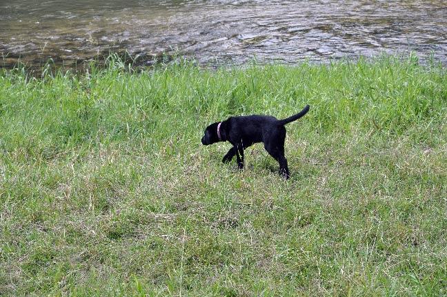 PuppyEnergy-TheExplorer