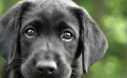 Puppy-Energy