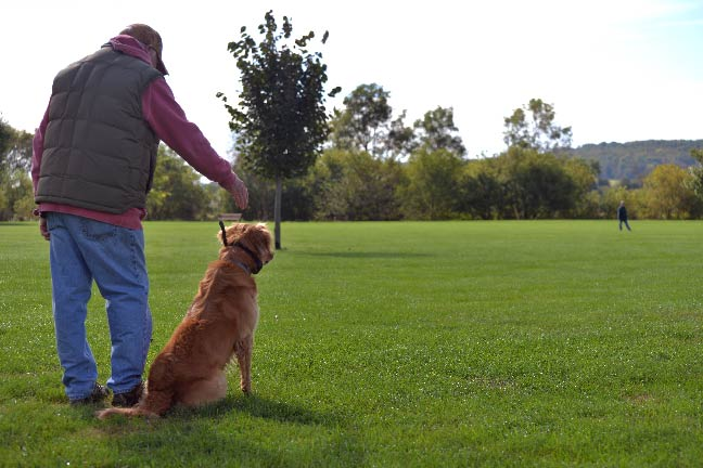 Dog-Training-Scenery