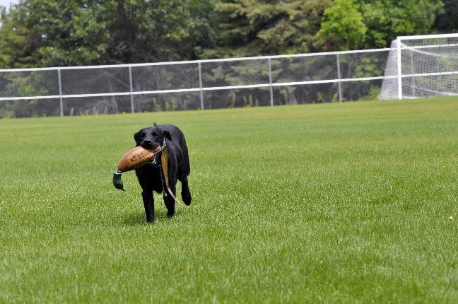 Dog-Training-Scenery