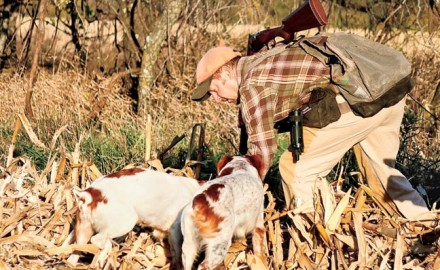 Author Scott Linden takes a closer look at the popular French Brittany, a smaller breed that certainly knows how to pack a lot of punch for big hunts!