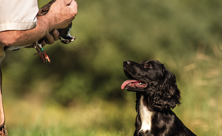 No dog owner sets out to train a dog with high hopes of a mediocre companion. Learn how to make the right choice in a trainer for your pup.